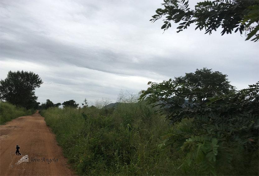 Green scenery around the community of Utalala, in the municipality of Cubal (Benguela province).