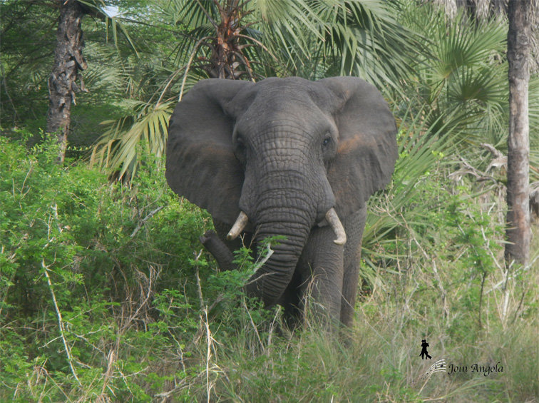 An elephant pictured at the Parque do Quissama.