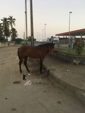This horse can often be seen eating grass next to the filling station at the Kalunga roundabout, near Benguela's city centre.