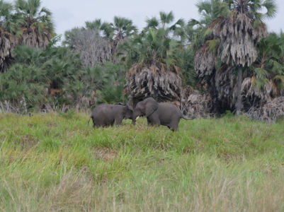 Two elephants in Quissama Park.