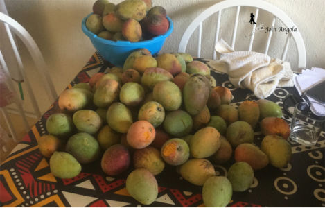 Mangos, a fruit Angolans love with all their hearts!